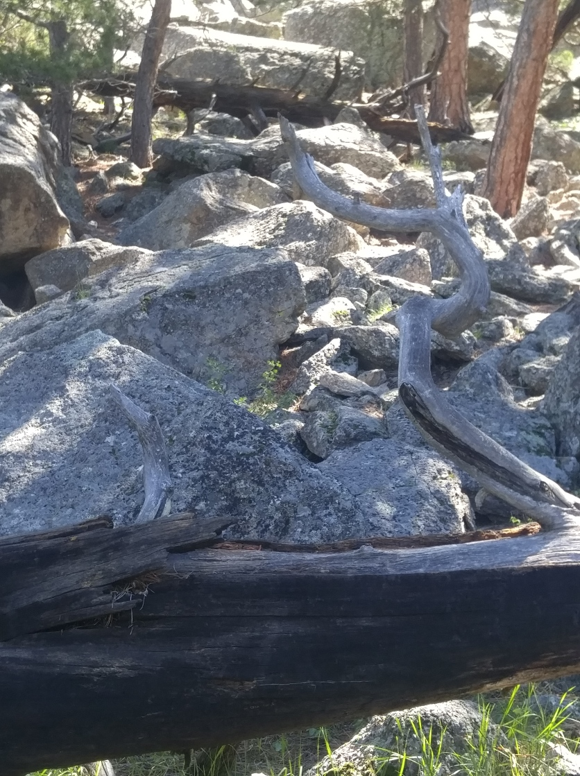 Boulder field. Note the sharp angles.