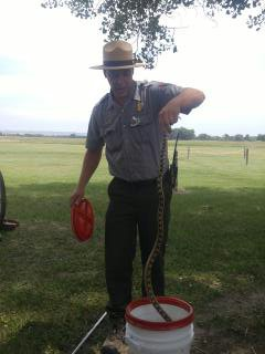 Uninvited guest being removed from ranger talk (Buford the Bull Snake)