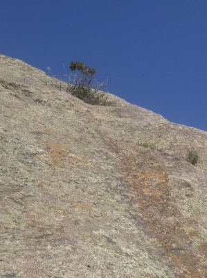 Plant growing in rock at Independence Rock State Historic Site, WY