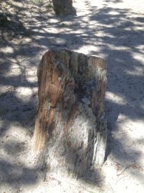 Petrified stump on the trail at the Petrified Forest of the Black Hills museum.