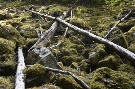 Moss covered rocks with logs on the Happy Panther Trail in the Ross Lake National Recreation Area.