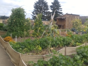 Vegetables and flowers in the Garden at the Fort Vancouver National Historic Site.