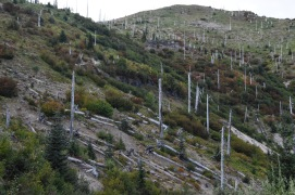 Ghost forest on east side of Mount Saint Helens.