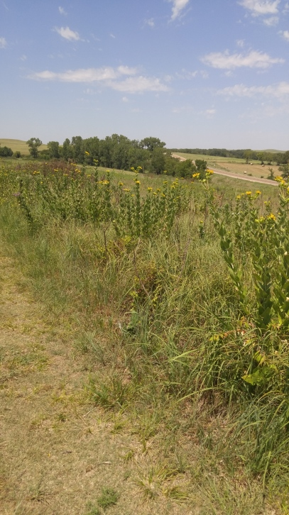 Tallgrass Prairie National Preserve in Strong City, Kansas. July timeframe.
