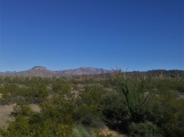 Sonoran Desert landscape with Saguaro Cactus, Ocotillo, and Creosote. Taken in the Organ Pipe Cactus National Monument.