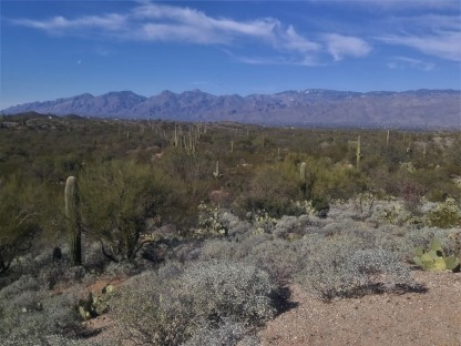 Rincon mountains in the background. Variety of plants in the foreground.
